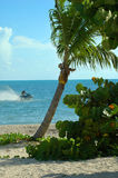 Seadoo waverunner with palm tree. View of a palm tree on the shore and a jetski in the water Royalty Free Stock Image