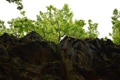 Seaeye kanjon royaltyfri foto