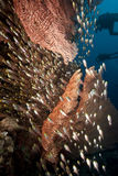 Seafan And Glassfish Royalty Free Stock Photos