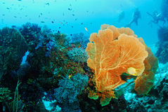 Seafan with coral colony , Similan island Thailand Stock Photos