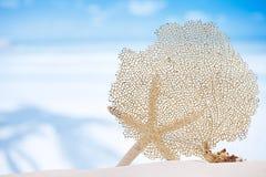 Seafan et étoiles de mer avec l'océan, la plage, le ciel et le paysage marin Photographie stock