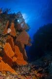 Seafan korall och bakgrund för blått vatten i det Maldiverna indierhavet Royaltyfria Bilder