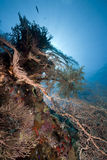 Seafan and ocean. Taken in the red sea Stock Image