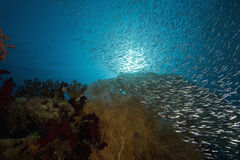 Seafan, ocean and fish Stock Images