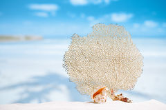 Seafan and seashell with ocean, beach, sky and seascape Stock Photos