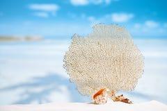 Seafan and seashell with ocean, beach, sky and seascape Stock Photos