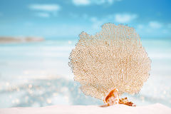 Seafan and seashell with ocean, beach, sky and seascape. Seafan and sea shell with ocean, beach, sky and seascape, shallow dof Royalty Free Stock Photography