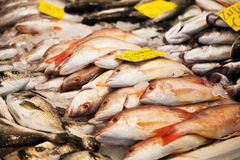 Seafish Royalty Free Stock Image