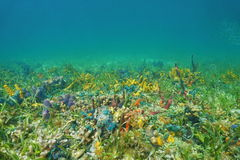 Seafloor with coral and colorful sea sponges Stock Photography