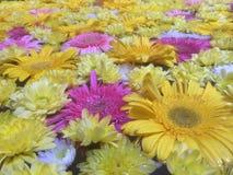 Seaflowers auf Wasser lizenzfreie stockbilder