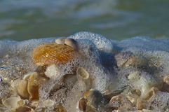 Seafoam from waves over shells. Waves rolling in over shells on beach with sea foam Royalty Free Stock Photos