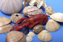 Seafood. Lobster and shells on blue background Royalty Free Stock Photography