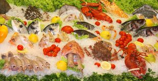Seafood. Still life seafood in ice with vegetables Stock Photos