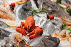 Seafood. Detail of the frozen sea food Stock Photos