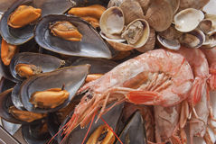 Seafood. Platter consisting of shrimp, clams and mussels Royalty Free Stock Photos