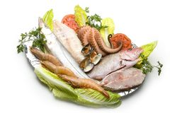 Seafood. Fish, octopus, clam and shrimp isolated in white background Stock Image