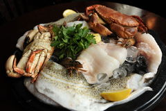 Seafood. Photograph of a selection of seafood uncooked on a plate Royalty Free Stock Photo