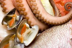 Seafood 3 Stock Photography