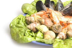 Seafood. Fresh and delicious seafood meal: mussels, shrimps, seashells ( whelks Stock Photos