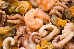 Seafood. Shrimps, mussels, octopuses and other seafood prepared for the use by close up Royalty Free Stock Image