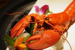 Seafood, American Lobster, Lobster, Decapoda royalty free stock photo