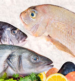 Seafood arrangement Stock Images