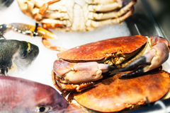 Seafood assortment on ice at the fish market stall  close up.  Stock Photo