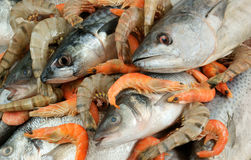 Seafood background Royalty Free Stock Images