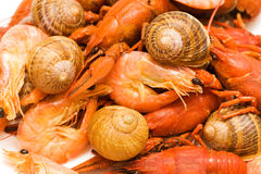 Seafood background Royalty Free Stock Image