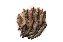 Seafood background. Closeup of raw tiger shrimps on a plate isolated on a white background. Top view stock photo