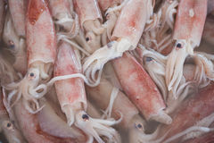 Seafood background - squids royalty free stock images