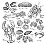 Seafood big set. Ink sketch isolated on white background. Hand drawn vector illustration. Retro style Stock Photography