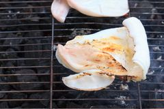 BBQ grilling squid raw on kiln. Seafood is big white squid on charcoal burn background. BBQ grilling squid raw on kiln stock image