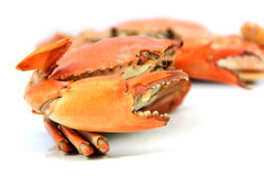 Seafood ,boiled crabs prepared Stock Photography