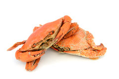 Seafood,boiled crabs prepared Stock Photography