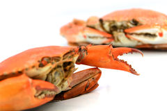 Seafood,boiled crabs prepared Royalty Free Stock Images