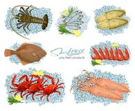 Seafood in cartoon style. Vector illustrations squid, cuttlefish, crab, shrimp, spiny lobster, flounder, sprat on ice. Seafood in cartoon style. Icons. Set Stock Photos