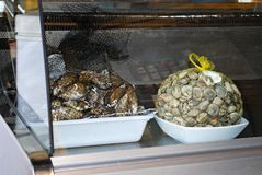 Seafood in chiller cabinet, Spain. Stock Photography
