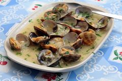 Seafood clam Stock Image