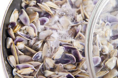 Seafood, clams. Steam seafood prepared as a basis for spaghetti royalty free stock image