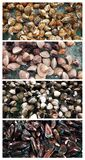 Clam seafood, Sea food collage.