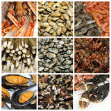 Seafood collage Royalty Free Stock Photography