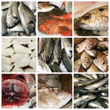 Seafood collage Stock Photo