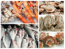 Seafood collection. A collage of fresh seafood Royalty Free Stock Photo