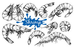 Seafood collection. Shrimp. Hand drawn sketch style seafood set. Shripms, prawns collection vector illustrations Stock Photography