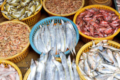 Seafood colorful on market. Kinds of fish and seafood selling in market, shown as different, various and market business dealing Royalty Free Stock Photography