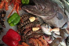 Seafood Composition. Seafood inced waiting to be cooked Royalty Free Stock Photography
