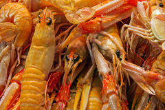 Seafood cooked Royalty Free Stock Photos