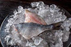 Seafood cooking preparation. Top view of dorado fillet on ice. Royalty Free Stock Photos