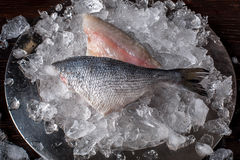 Seafood cooking preparation. Top view of dorado fillet on ice. Stock Photography